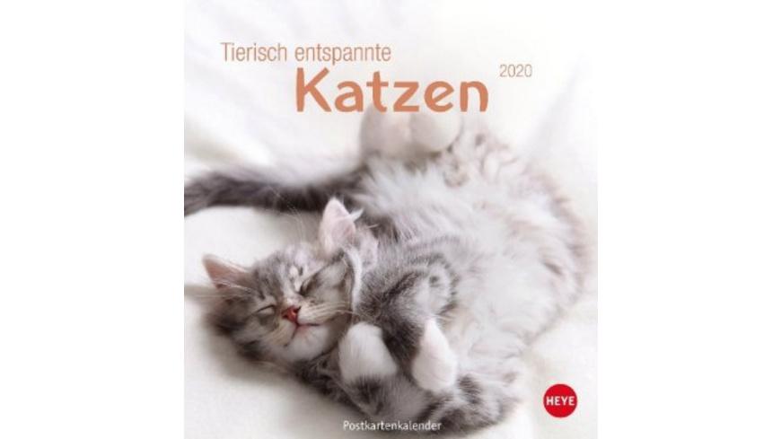 Tierisch entspannte Katzen Postkartenkalender 2020