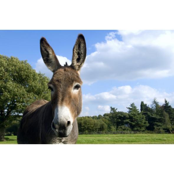 Esel-Trekking-Tour