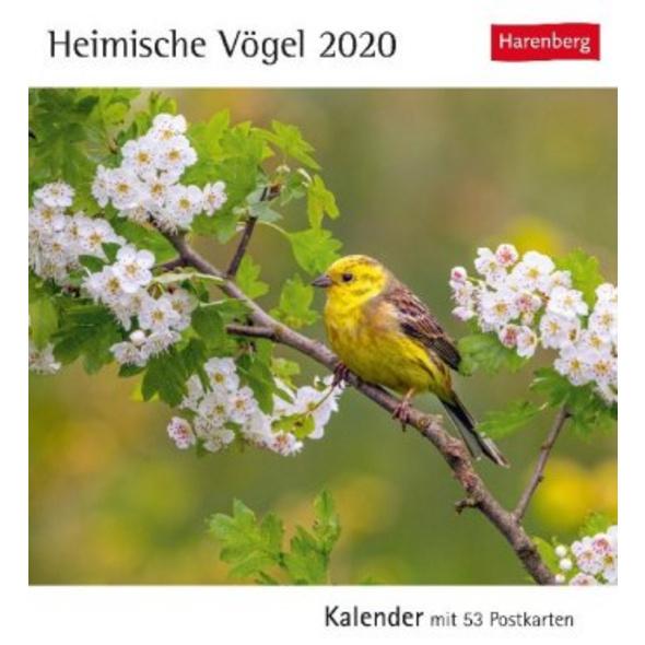 Heimische Vögel 2020