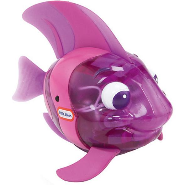 Sparkle Bay Funkel-Kaiserfisch - lila