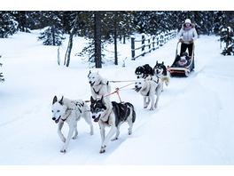 Schlittenhunde-Ausfahrt im Harzvorland